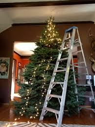 10 foot tree b