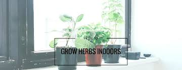 lights to grow herbs indoors grow herbs indoors indoor herb garden grow light growing herbs