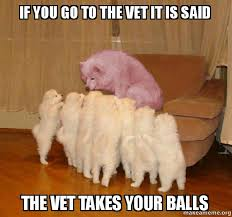 Dog At Vet Meme - if you go to the vet it is said the vet takes your balls