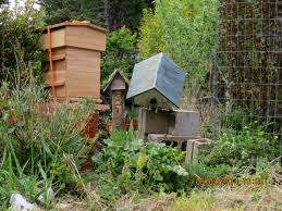 mary u0027s swarm lands in the backyard birdhouse adventures in