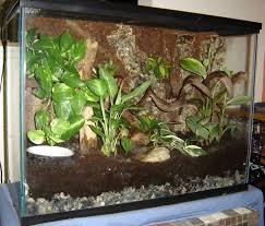 29 gallon tank setup ideas reptile forums information