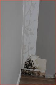 moisissure dans une chambre moisissure chambre humidité et donc moisissure dans une chambre