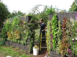 86 best dirtballs vertical gardens images on pinterest gardening