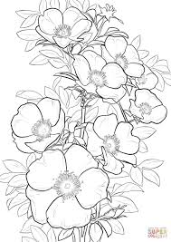 cherokee rose coloring page free printable coloring pages