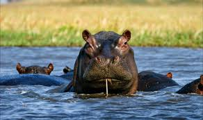 african safari animals what animals can you see on your african safari safari travel