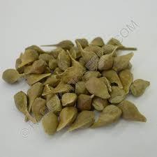 buy paperbark maple tree seeds rarexoticseeds