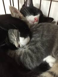 Long Distance Pillow Meme - this looks like max and ollie kitties pinterest cat ash