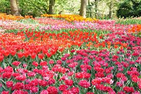 popular flowers for gardens best idea garden