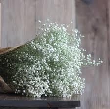 Bulk Baby S Breath Aliexpress Com Buy Dried Flowers Baby U0027s Breath Gypsophila Rose