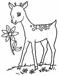 coloring deer coloring pages deer rapunzel coloring
