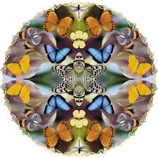the esoteric meaning of the butterfly in5d esoteric