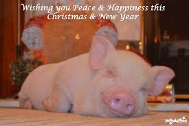 christmas pig a pet pig is a happy pig thanks to our fans followers for your