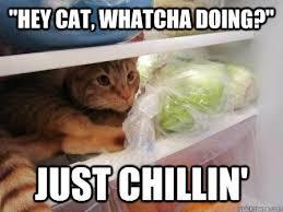 Fridge Meme - introducing fridge cat memedroid