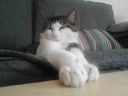 comment eviter les griffes de sur canape mon fait ses griffes n importe où que faire je dois