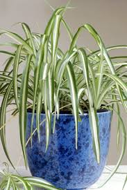 25 native plants for the 25 easy houseplants easy to care for indoor plants