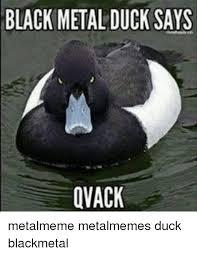 Black Metal Meme - black metal duck says dvack metalmeme metalmemes duck blackmetal