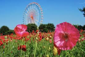The Month Of June Flower - flower calendar u2013 hitachi seaside park