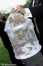 butterflies release at ceremony can be a great way