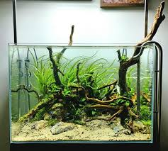 Aquascapes Pools Favourites Tank By Kris Weinholda Different Substrate Look For