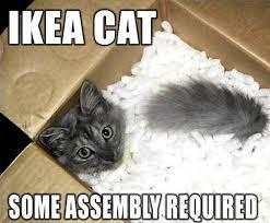 Meme Kitty - super sad cat meme kitty love meme