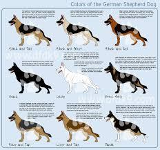german shepherd colors by mausergirl german shepard pics