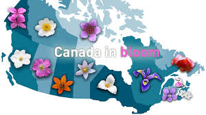 canada flowers news canadian quiz do you your provincial flowers the