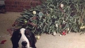 Christmas Dog Meme - the tree fainted imgur