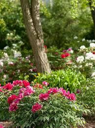 Plant Flower Garden - 3897 best gorgeous garden plants images on pinterest flower