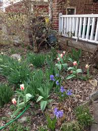 How To Mulch Flower Beds How To Use Fallen Leaves In The Garden Grow Pittsburgh