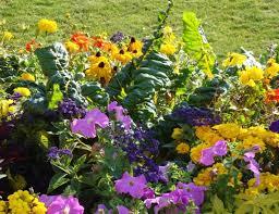 veg vs flowers fine gardening