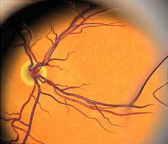 Webmd Human Anatomy Eye Video Inside Your Eyeball And How You See