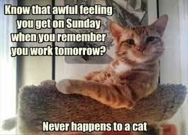 Sunday Meme - don t bother these cats who are enjoying their sunday memes i