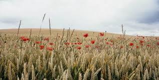 l apprentissage agricole dans les hauts de version longue l agriculture en hauts de onisep