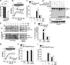 ca2 signaling but not store operated ca2 entry is required for