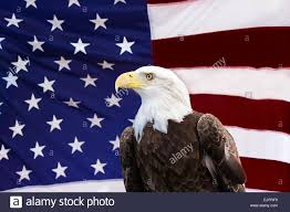 Honor Flag American Flag American Eagle Usa Pride Honor Liberty America Peace