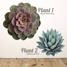 succulent plant wall sticker by oakdene designs
