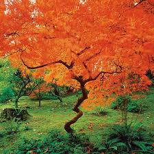 10 best trees and shrubs for fall color shrub gardens and