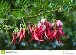 new zealand native plants and trees new zealand flower species beak flower this new zealand
