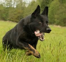 hero dogs archives orvis news
