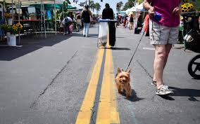 visiting oceanside with fido