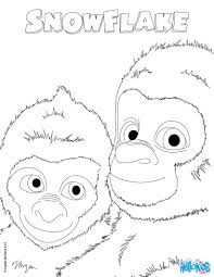 snowflake the white gorilla out coloring pages hellokids com