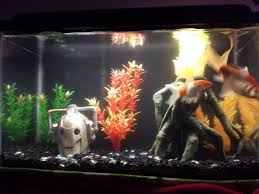 new fish tank setup doctorwho