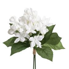 stephanotis flower f5797 stephanotis bundle swann agencies