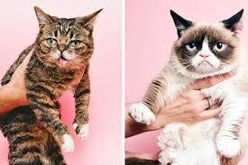 21 Of The Best Grumpy - grumpy cat instagram the best cat 2017