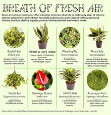 common indoor plants that improve air quality diy to do list
