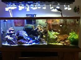 Refugium Light 24 Best Refugium Images On Pinterest Aquariums Reef Aquarium