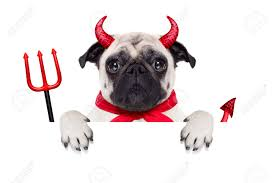 halloween background puppys halloween devil pug dog hiding behind white empty blank banner