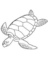 giant green sea turtle coloring download u0026 print