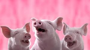 u0027three pigs u0027 millennials u2014commentary