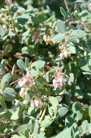 native plant nursery santa cruz plant catalog u2014 native revival nursery